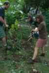Sonya's garden-1
